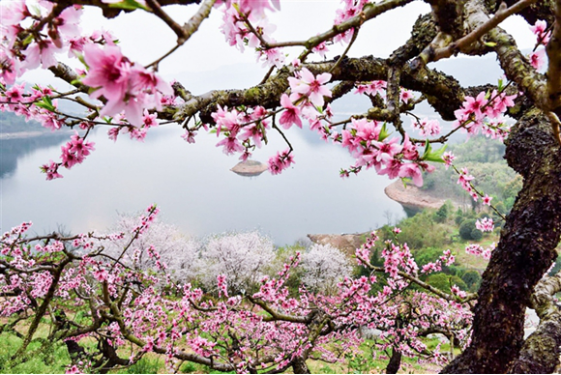 浪漫春日之约!上海周边十大人气赏花地大盘点