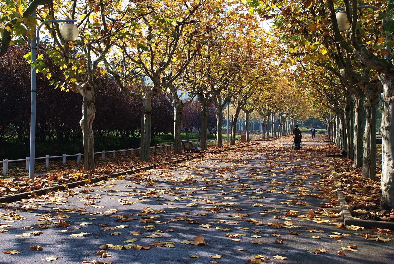 长宁年内将开放数座主题公园 加入更多现代元素