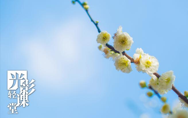 【光影轻课堂】植树节,去公园拍些花花草草吧