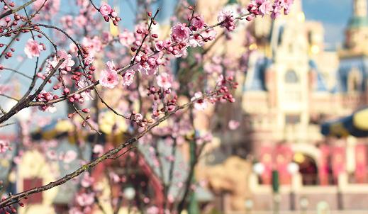 澳门永利网上娱乐迪士尼春季赏花指南来了