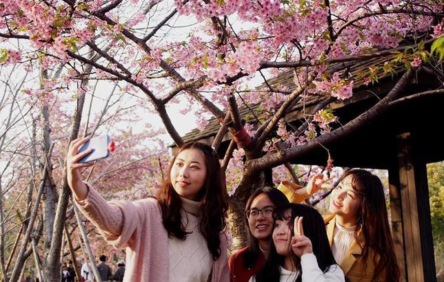 2019上海樱花节开幕