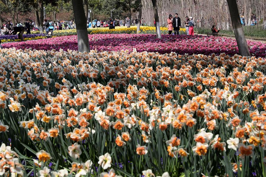 上海:赏春花 沐春光