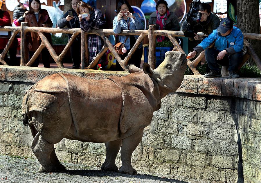上海:亚洲独角犀牛正式与游客见面