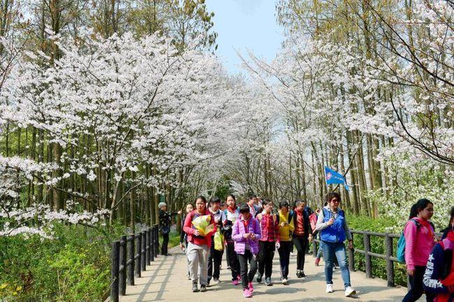 共青森林公园百花展周末开幕 市民赏花有了新去处