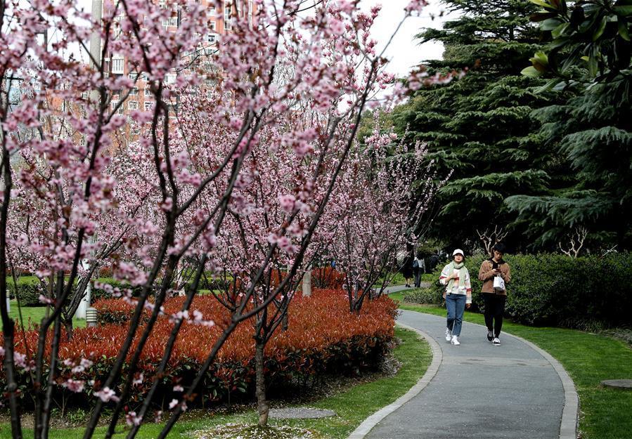 """上海城市绿道:""""家门口""""的绿色,钢筋水泥中的""""生态密码"""""""