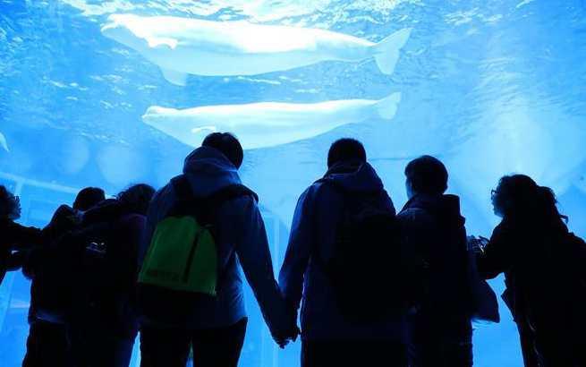 上海:自闭症儿童与海洋动物亲密接触