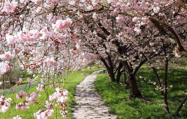 定制属于上海春天的图案 正大樱花节精彩不断