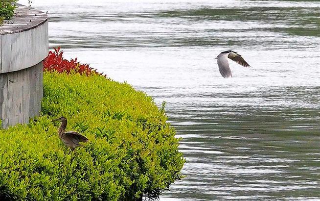 水質改善蘇州河 踏青就在家門口