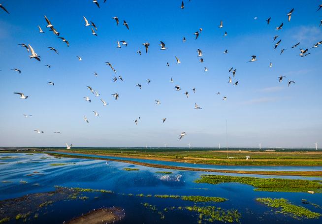 东滩候鸟保护区