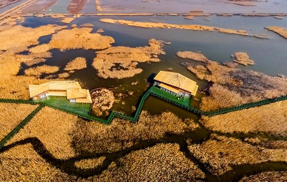 东滩湿地秋色