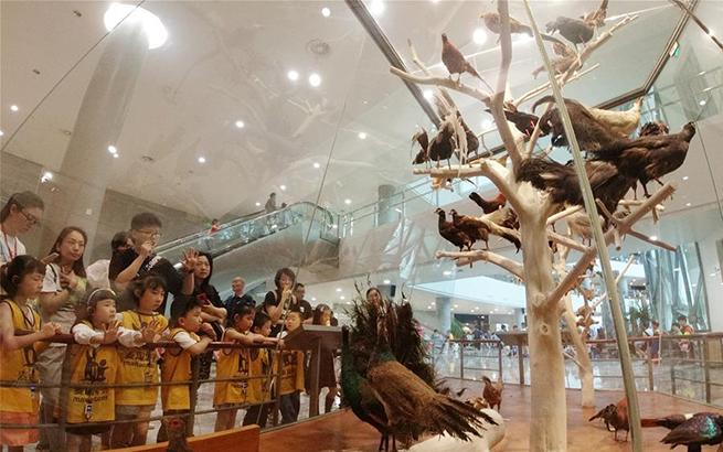 在博物馆跟鸟类科学家面对面