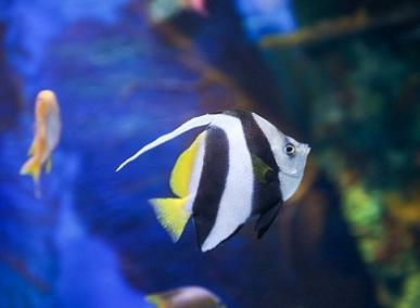 金秋时节,上海海洋水族馆迎来海龙海马特展