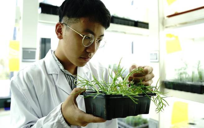 上海多地發現國家二級重點保護野生植物粗梗水蕨