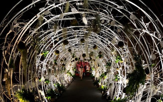 上海:阴生植物展受青睐