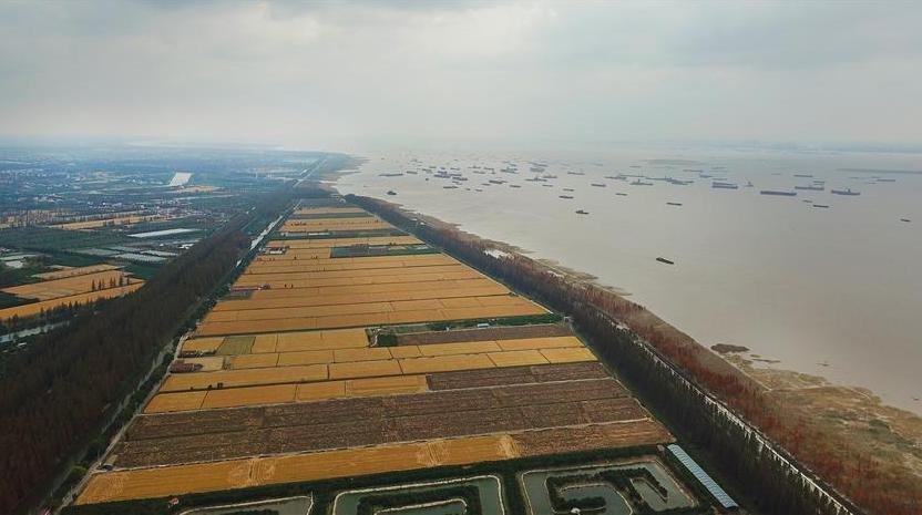 缤纷多彩长三角——冬日的上海崇明长江入海口