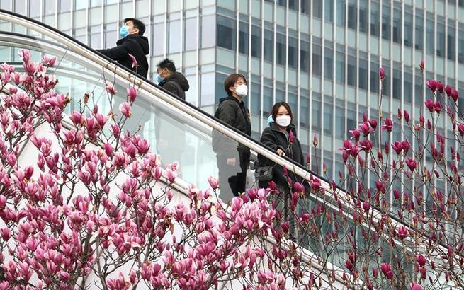 上海街头春意浓