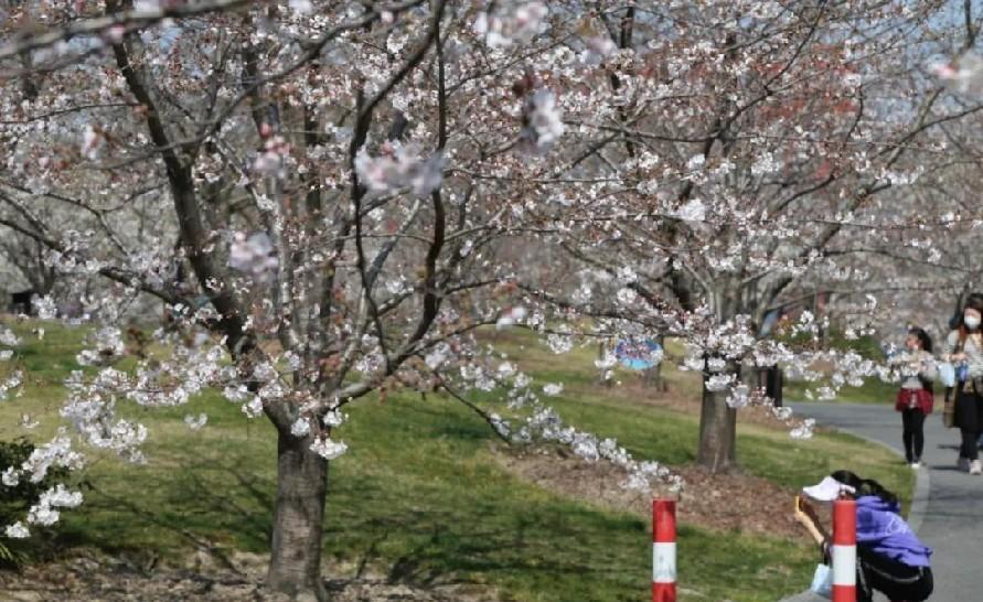 上海:万物复苏来,春色暖人心!