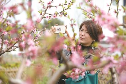 上海多座公园在清明迎来今年开春以来最大客流