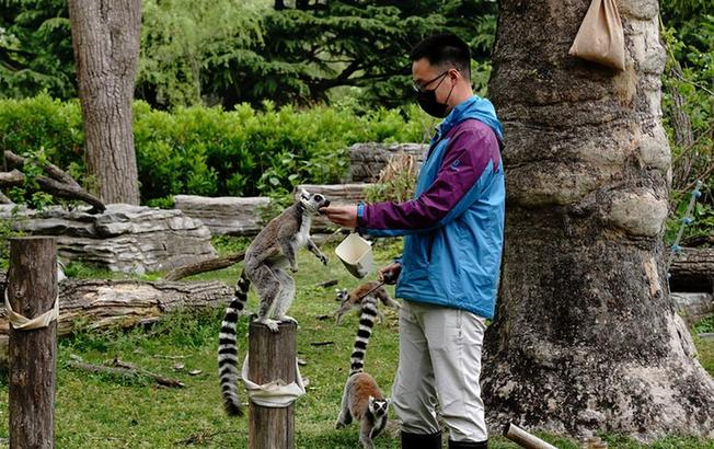 上海動物園:讓動物們的生活更精彩