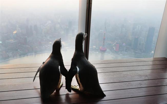 企鹅兄弟游申城