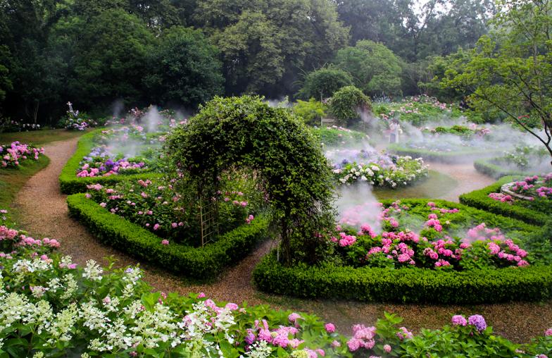 初夏缤纷聚满园!上海共青森林公园两万余株八仙花盛开
