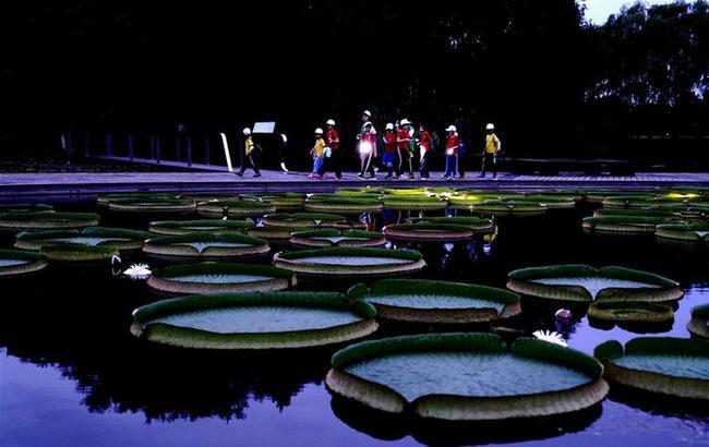 """植物园""""奇妙夜"""""""
