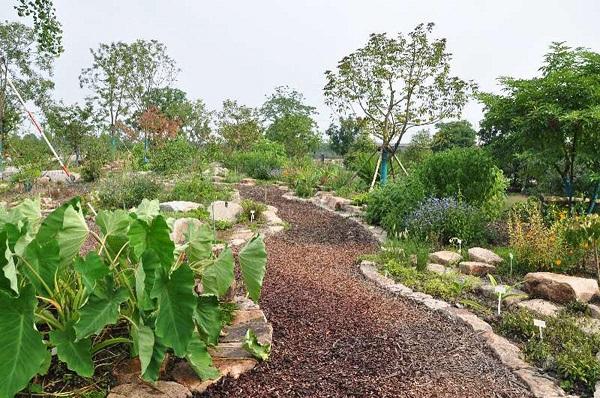 辰山植物园药用园完成改建 后天起将向公众开放