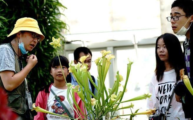 上海:食虫植物展受青睐
