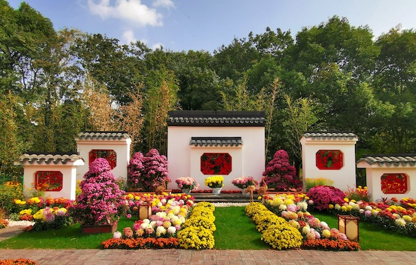 超20萬遊客賞過上海菊花展,最佳賞花期約余10天
