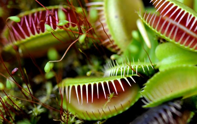 """在上海辰山植物园""""探秘""""食虫植物"""