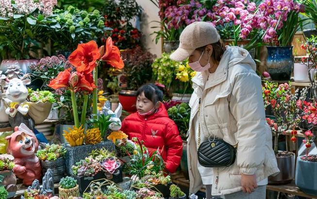 上海:新年花市俏