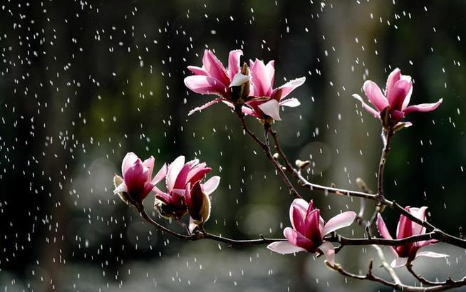 上海:春至花如锦