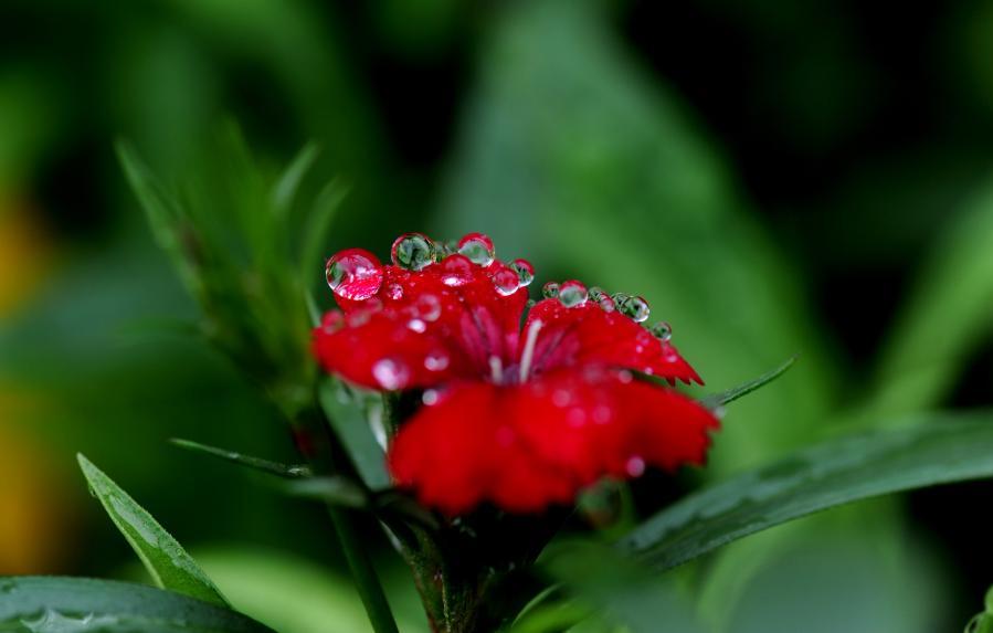 上海:春雨润如珠