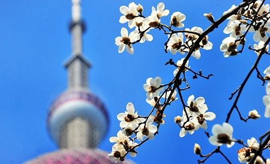 2020年沪空气质量优良率87.2% 较上年升2.5%