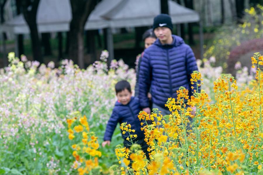 上海:春分时节百花开 踏青赏花正当时