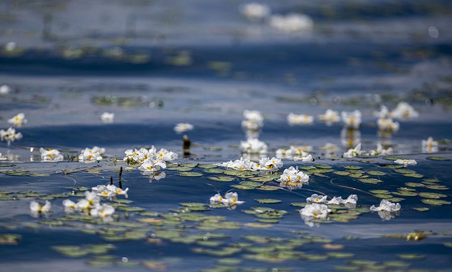 """""""老人与海"""":扎根洱海20年,守得水清月明花重现"""