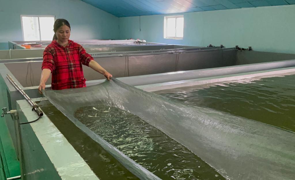 國際生物多樣性日|長江刀魚保護與人工繁殖穩步推進